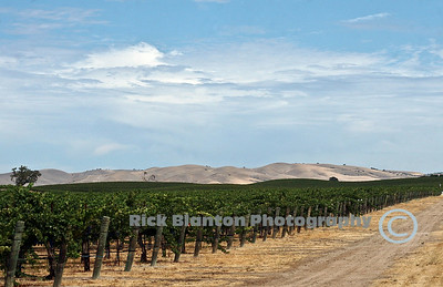 """ Wine Country """