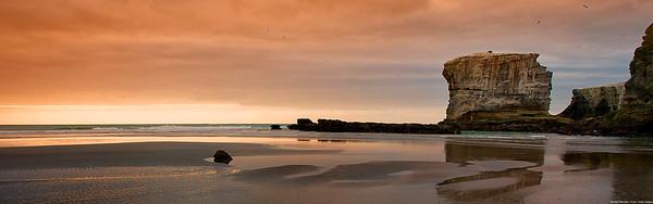 Cliffs with Gannet colony at sunset, Muriwai Regional Park, near Auckland, New Zealand
