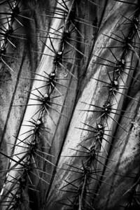 cactuslines_20710__0008