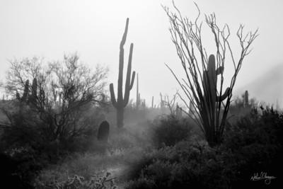fog_cactus_2