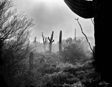fog_cactus_1