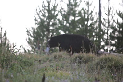 One last black bear picture (photo by Dave)