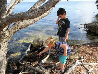 On the hunt for gekkos