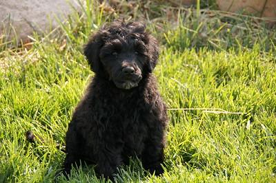 Makai, Gorilla Puppy
