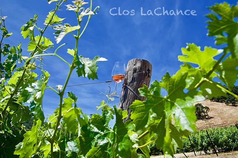 Wine in the Vine