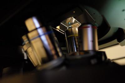 Malaya postage stamp confocal laser scanning microscopy Nikon Eclipse Ti2-E