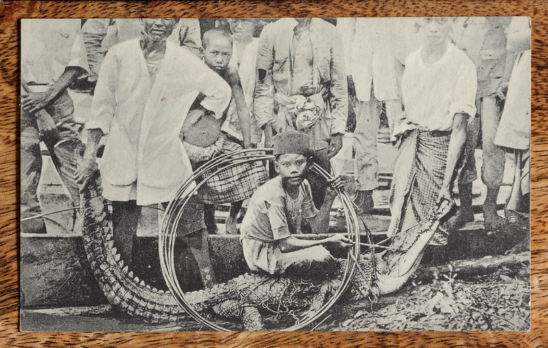 Malaya postcard showing crocodile trapping