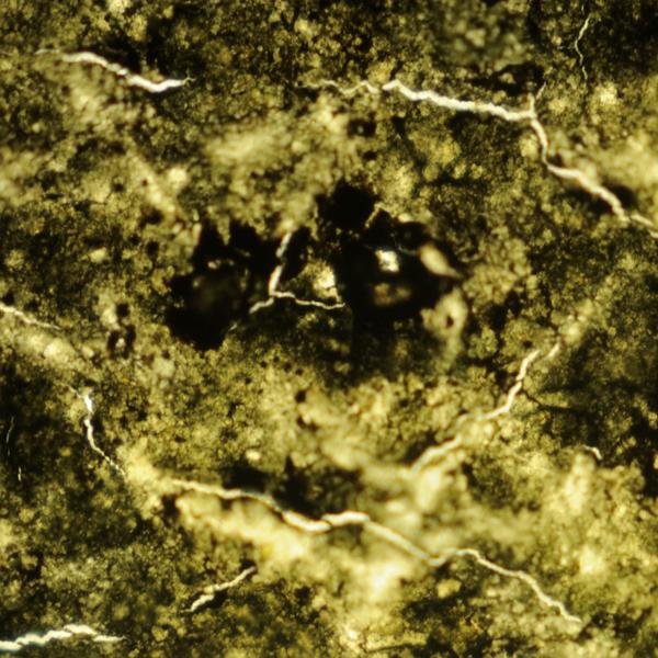 100× plan apochromatic photomicrograph of BMA Malaya 1c black