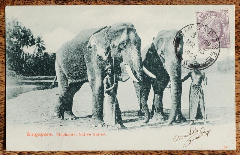 Malaya postcard: domesticated elephants
