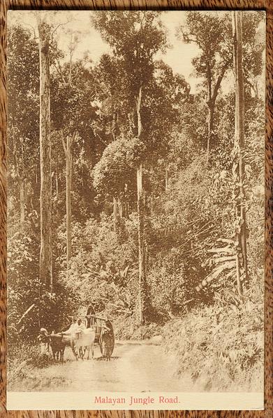 Postcard of Malayan jungle road with bullock cart
