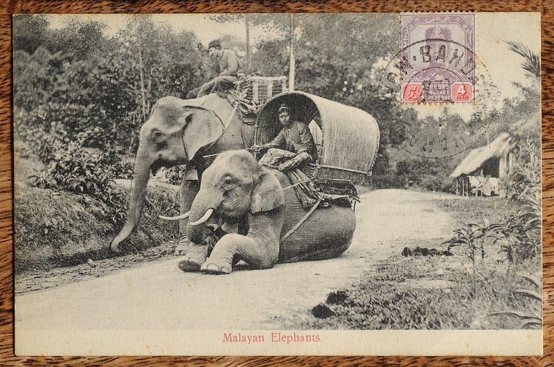 Malayan elephants postcard with Johore Sultan Ibrahim stamp cancelled with Bandar Maharani/Muar cds