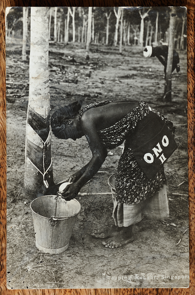 Dutch method of rubber tapping Malaya postcard