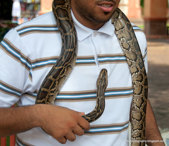 Man holding a python at the Oriental Village, Langkawi, Malaysia, in June 2011