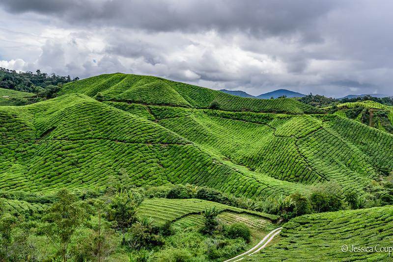 Small Roads Through the Tea Plantations