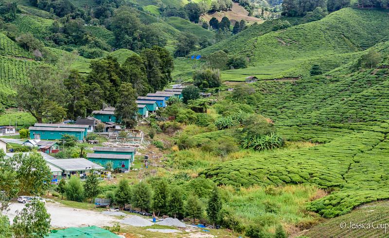 Tea Plantation Worker Housing