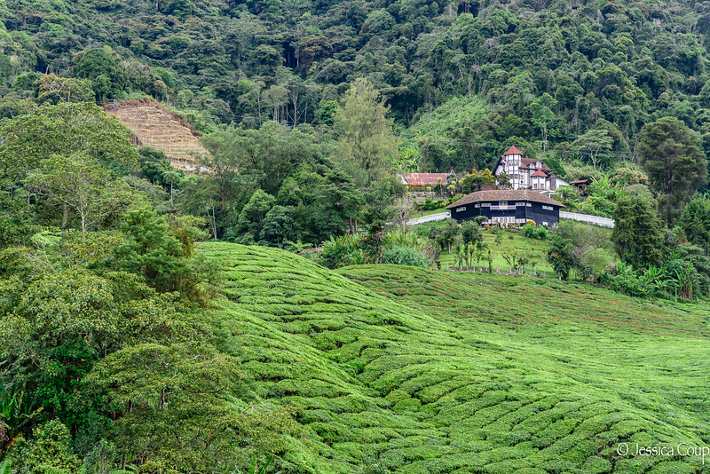 Tea Plantation Owner's House