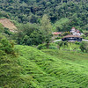Tea Plantation Owner's House