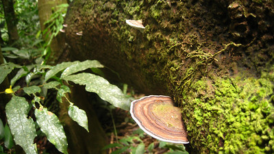 Forest fungus, Cameron Highlands, Malaysia