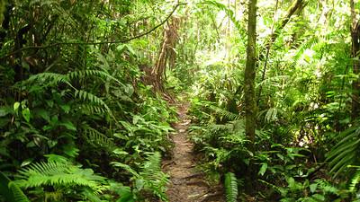 Jungle trek, Cameron Highlands, Malaysia