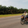 Hot riding through oil palm fields