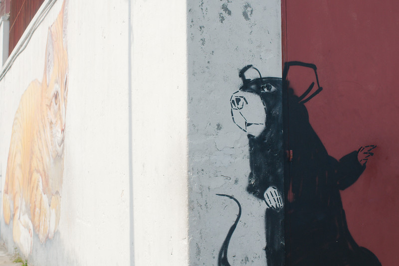 """""""The Giant Rat"""" and """"Skippy the Giant Cat"""" by Artists for Stray Animals"""