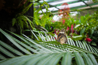 Penang Butterfly Farm, Penang, Malaysia