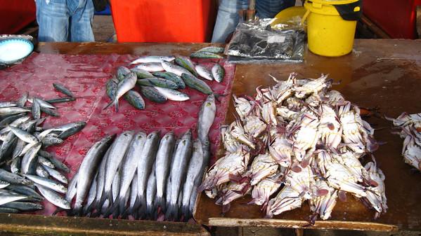 Fish Market — Kota Kinabalu, Sabah, Borneo, Malaysia