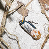 Leafhopper sp. Cicadellidae<br /> 2579, Gunung Mulu National Park, Sarawak, East Malaysia, April 19, 2016