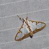 Spilomelini sp.  Pyraustinae, Crambidae<br /> 1061, Cameron Highlands, Pahang, West Malaysia, April 8, 2016