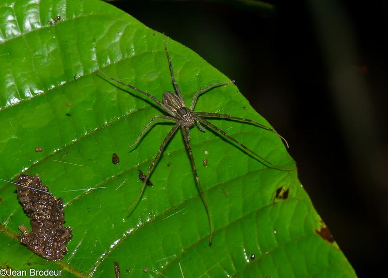 2702, Gunung Mulu National Park, Sarawak, East Malaysia, April 19, 2016