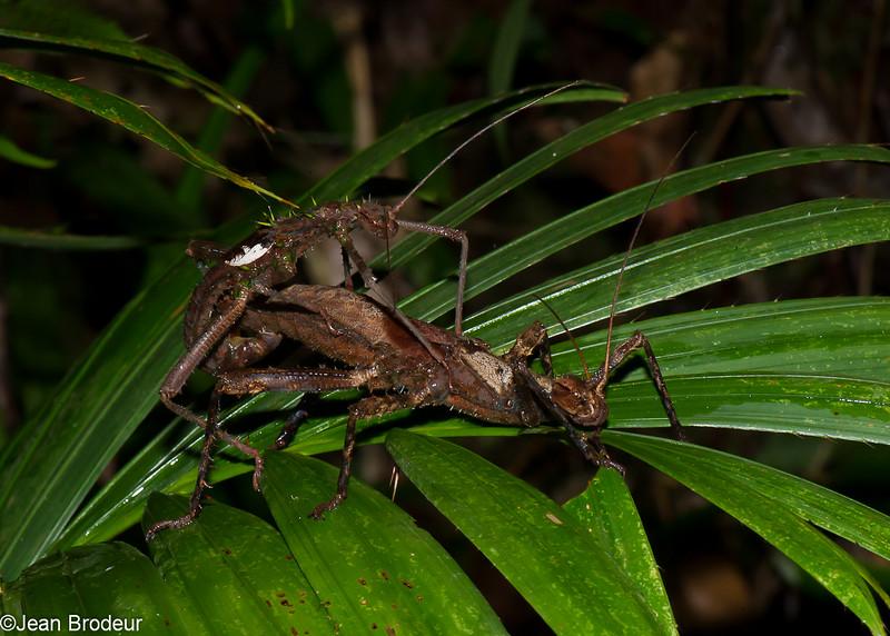 1669, Bako National Park, Sarawak, East Malaysia, April 13, 2016
