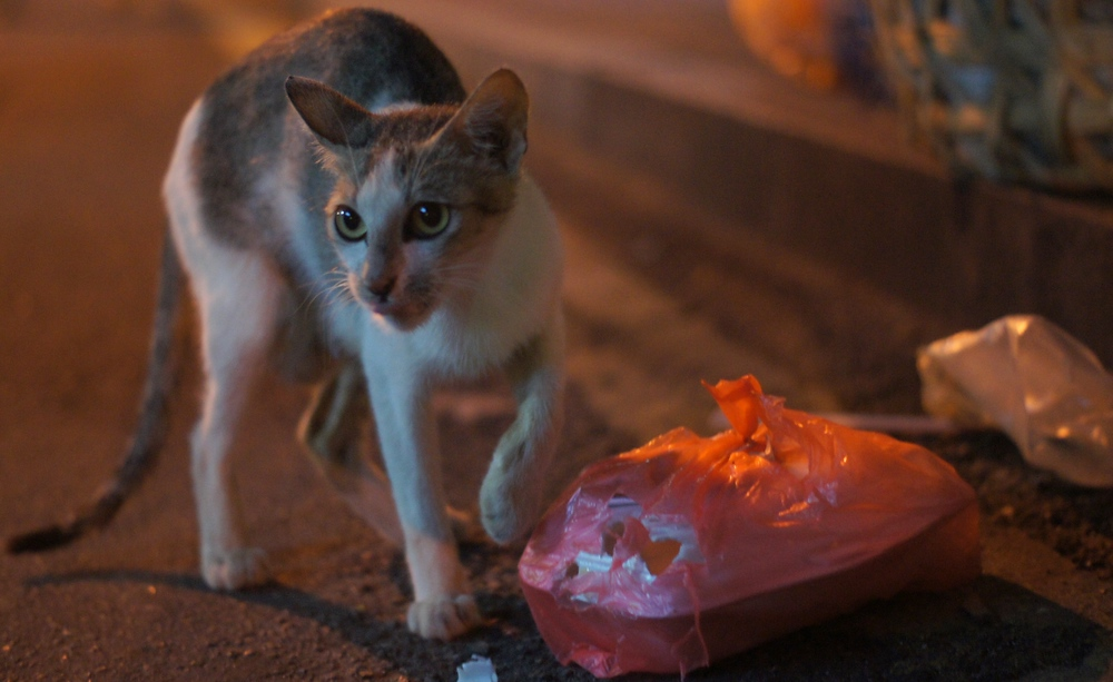 A cat scratches at a bag in search of a few scraps. If you visit Melacca you'll notice plenty of critters roaming about.