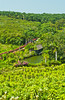 Hillside gardens for the cultivation of orchids in Orchid Valley in southern Malaysia.