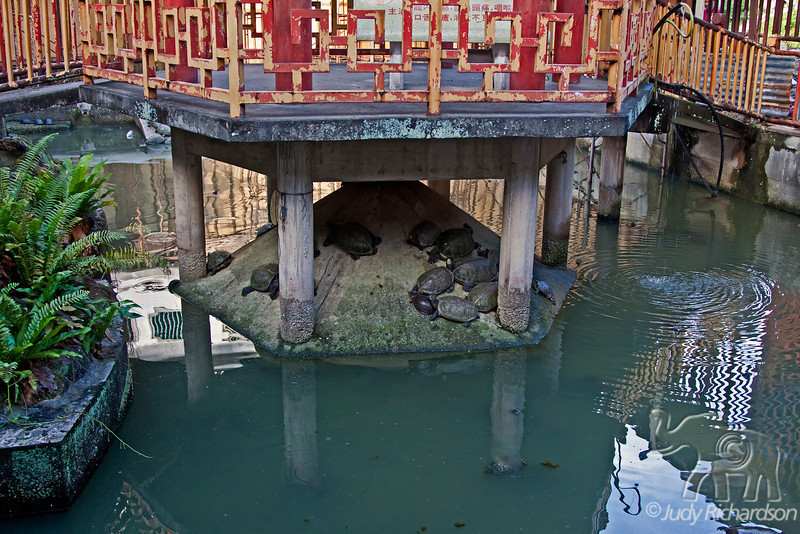 Liberation Pond at the Kek Lok Si Temple in Penang. Turtles are left by devotees in the pond as symbols of spiritual liberation