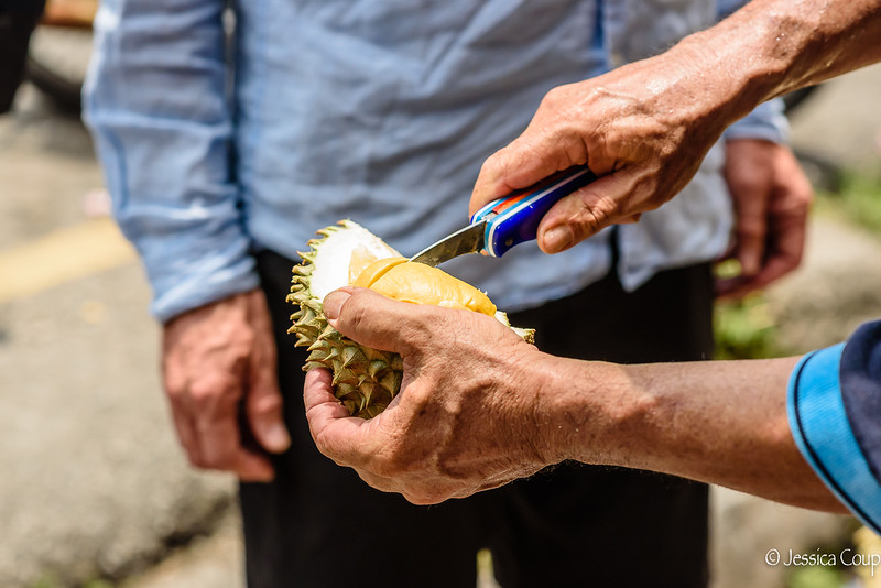 Slicing the Durian