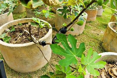 Plant Propagation Techniques at Tropical Fruit Farm Penang
