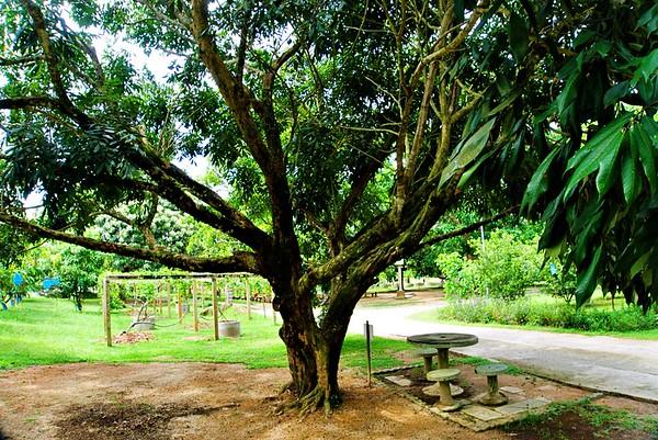 Tropical Fruit Farm Penang Malaysia