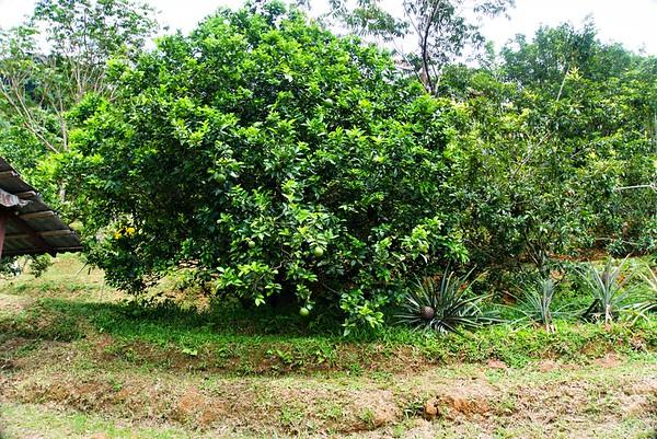 Tropical Fruit Farm Penang