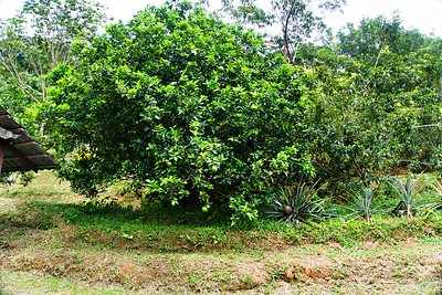 Tropical Fruit Farm Penang