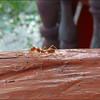 Big Ant!