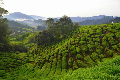 BOH Tea Plantation in the Cameron Highlands of peninsular Malaysia.
