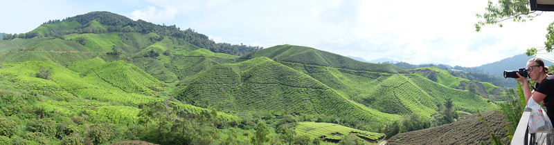 BOH Tea Plantation in the Cameron Highlands of peninsular Malaysia.