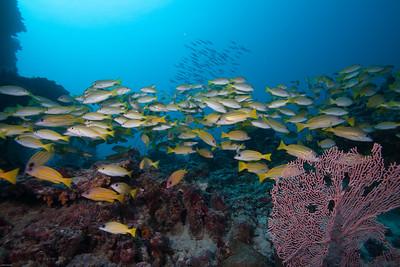 Baa Atoll - Maldives - January 2013