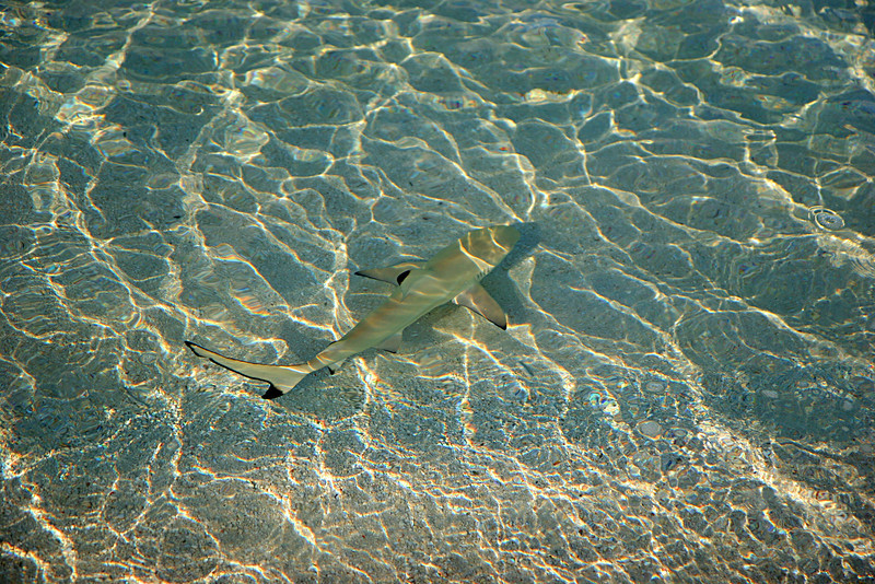 Baby sharks in the surf