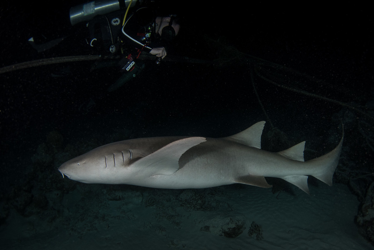 Nurse Shark Night Dive at Alimathaa