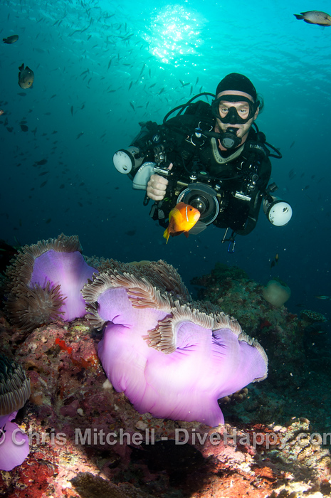 Jez with clownfish and anenome at Hafsaa Thila