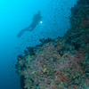 Diver over coral, Maldlves MV Orion January 2011