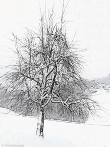 Winterbaum in Wädenswil