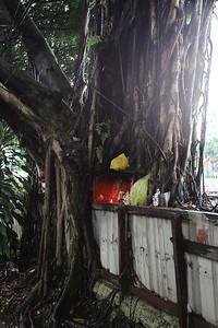 Drzewka w Malezji