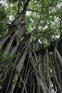 Fajne drzewo